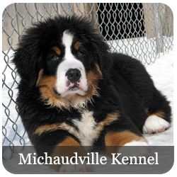 Michaudville Kennel