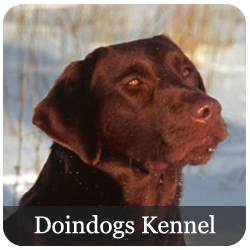 Doindogs Kennel