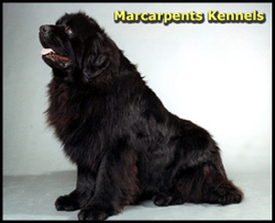Marcarpents Kennels