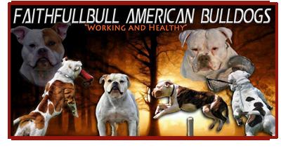 Faithfull Bulls American Bulldogs