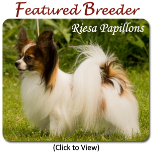 Featured Breeder - Iroc Bulldogs
