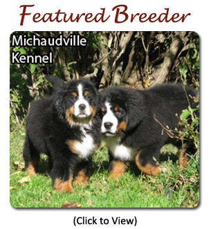 Bernese Mountain Dog Canadas Guide To Dogs