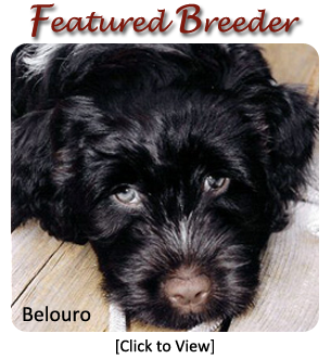 Portuguese Water Dog Breeders by Region - Canada's Guide to Dogs