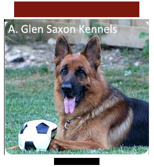 A Glen Saxon