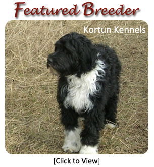 Portuguese Water Dog Breeders - Canada's Guide to Dogs