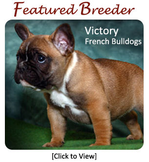 French Bulldog Breeders - Canada's Guide to Dogs