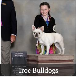 Featured Breeds - Iroc