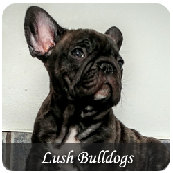 Featured Breeds - Lush