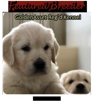 Golden Retriever Breeders