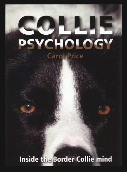 Border Collie Psychology